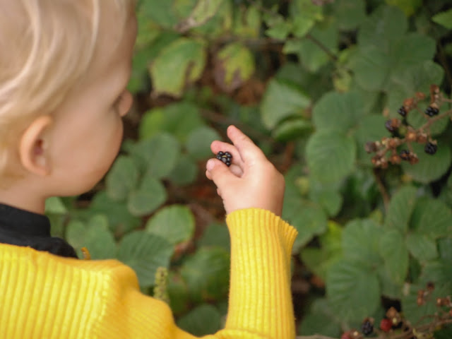 Toddler holding blackberry in front of hedgerow