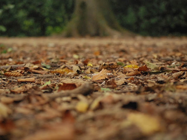 Woodland floor covered in fallen leaves